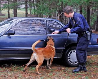 Police Officer with dog searching vehicle for drugs